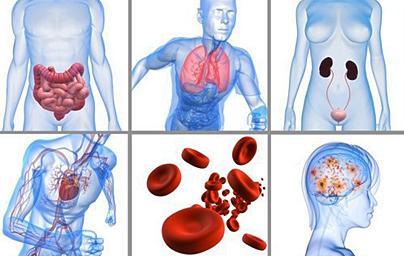 Bioresonance - seance en France - Système digestifs, cardio, endocrinien, nerveux