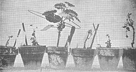 plantes de Lakhovsky - biorésonance